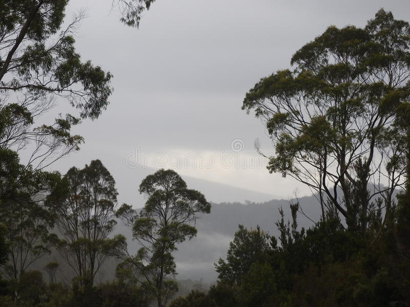 Franklin-Gordon Wild Rivers National Park, Tasmanien stockfoto