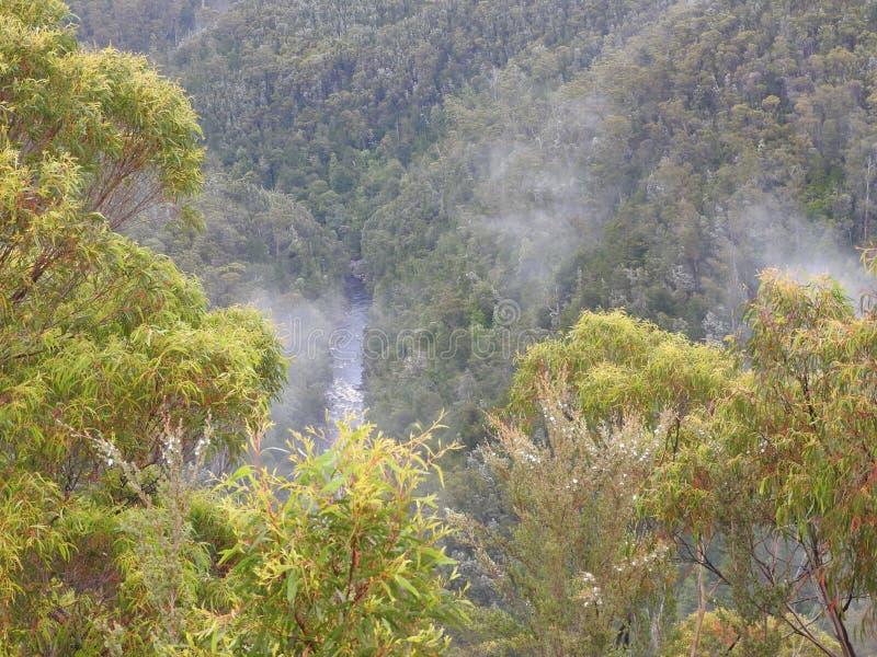 Franklin-Gordon Wild Rivers National Park, Tasmanien stockbilder
