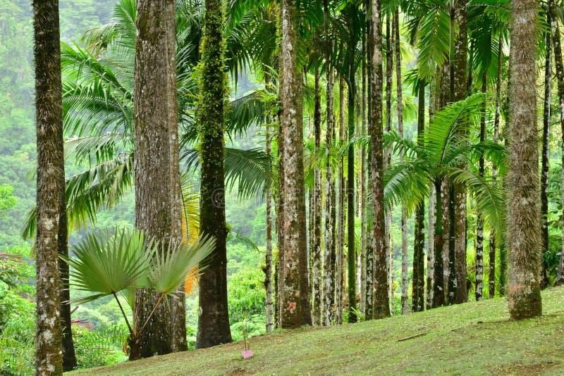 Frankrijk, de schilderachtige tuin van Balata in Martinique stock afbeeldingen