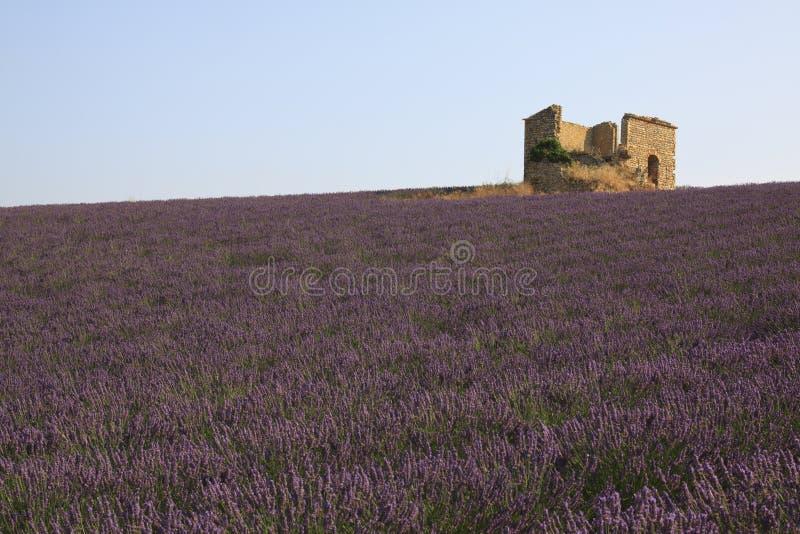 Frankrijk, Lavendelgebied en landbouwbedrijf royalty-vrije stock foto's