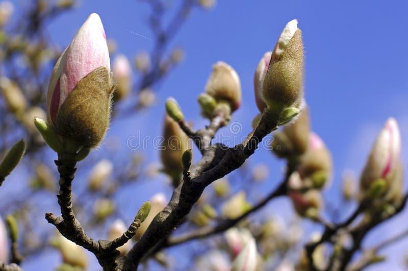 Frankrijk; Parijs; De tijd van de lente stock afbeeldingen