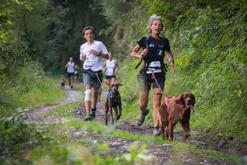 FRANKRIKE DES VILLARDS FÖR HELGON COLOMBAN AUGUSTI 2015: Konkurrenter som kör med hundkapplöpning på Forest Path i Rhones Alpes,  arkivfoton