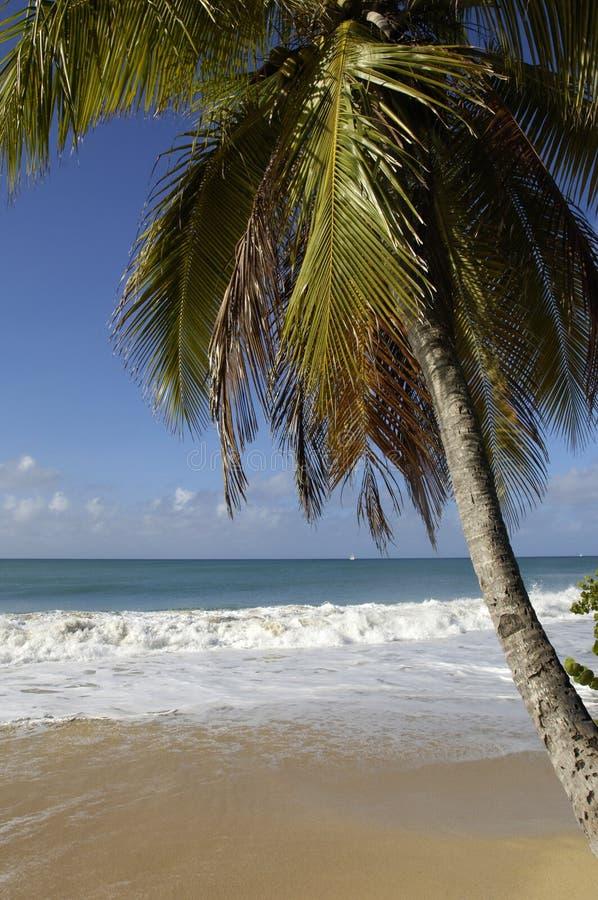 Frankrike Martinique, saltdam sätter på land i Sainte Anne royaltyfria foton