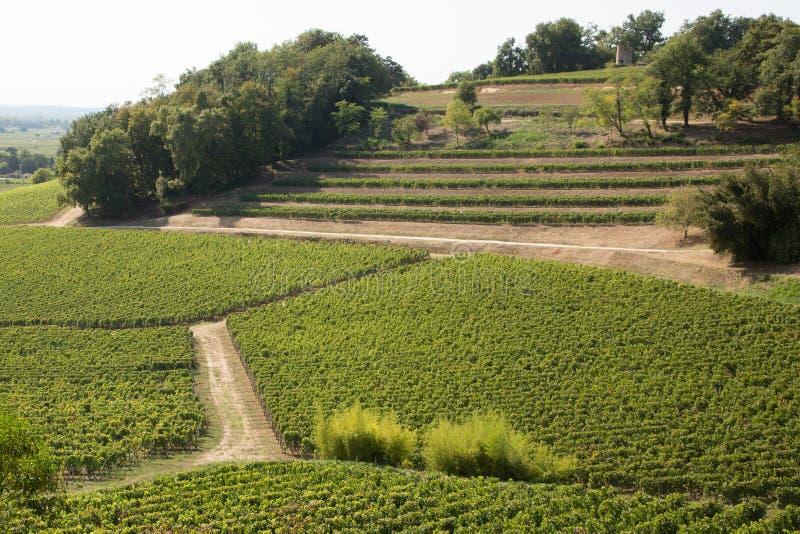 Frankrikes vingård Bordeaux vackra landskap i Saint Emilion Vineyards i Aquitaine-regionen i Frankrike royaltyfria bilder