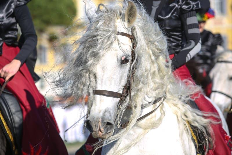 Frans Carnaval van Nice royalty-vrije stock afbeelding