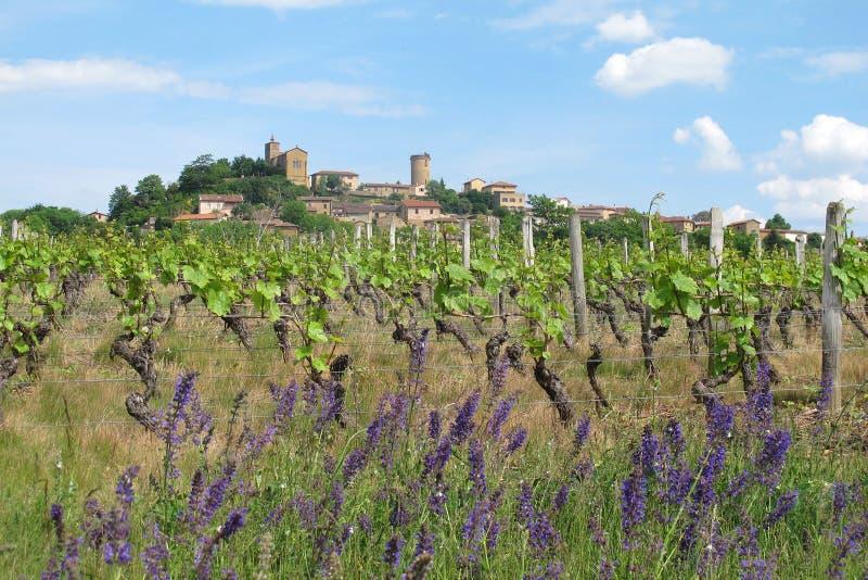 Download Frans dorp in Beaujolais stock afbeelding. Afbeelding bestaande uit groen - 39107687