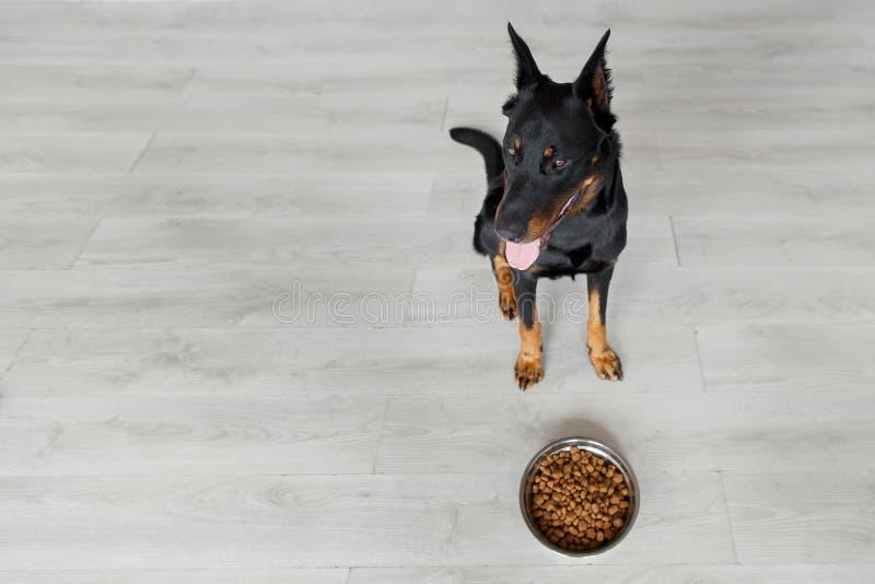 Franse herder tegen kom met hondevoer royalty-vrije stock afbeelding