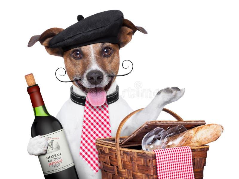 Franse hond stock afbeelding