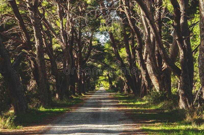 Franse landweg die boomsteeg doornemen stock foto's