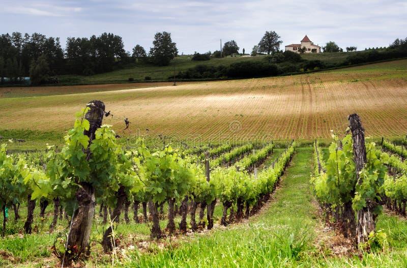 Franse wijngaard stock foto