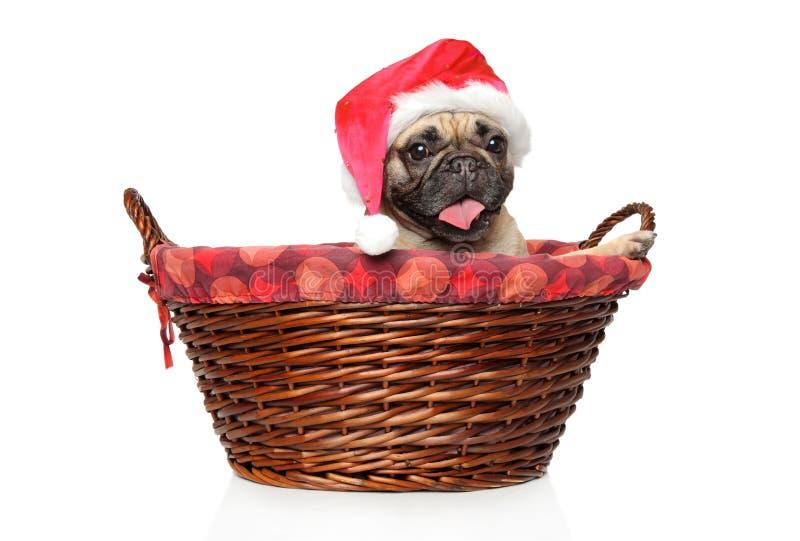 Fransk bulldogg i röd hatt för jultomten arkivbild