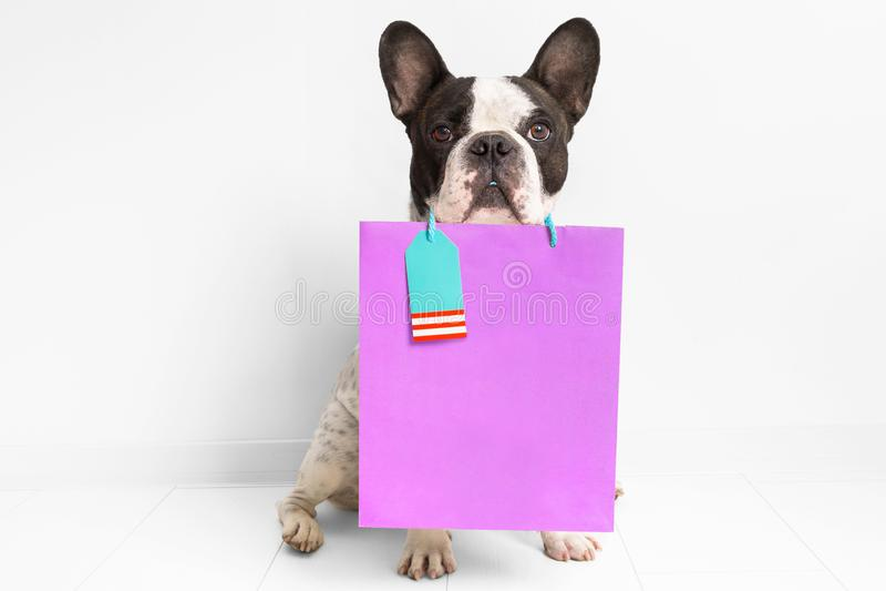 Fransk bulldogg med den shoppa påsen royaltyfri bild