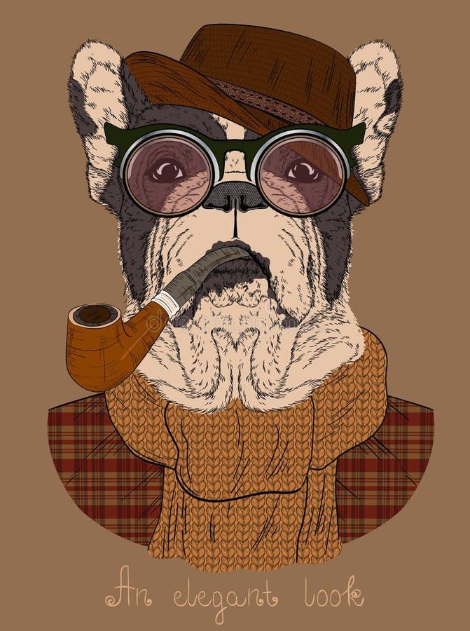 Fransk bulldogg med tobakröret och exponeringsglas royaltyfri illustrationer