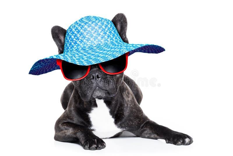 Fransk bulldogg på ferier royaltyfri fotografi