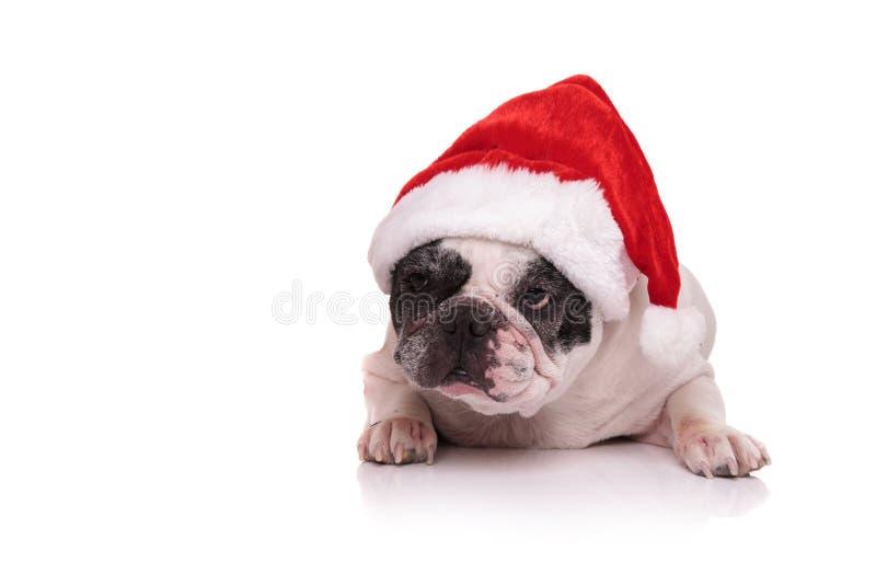 Fransk bulldogg som bär Santa Claus den röda hatten fotografering för bildbyråer