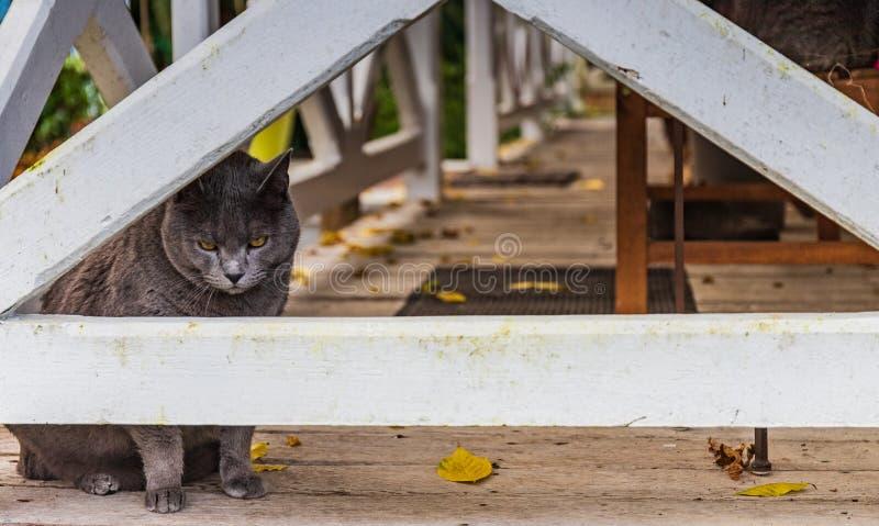 Fransk katt till och med staketet royaltyfri foto