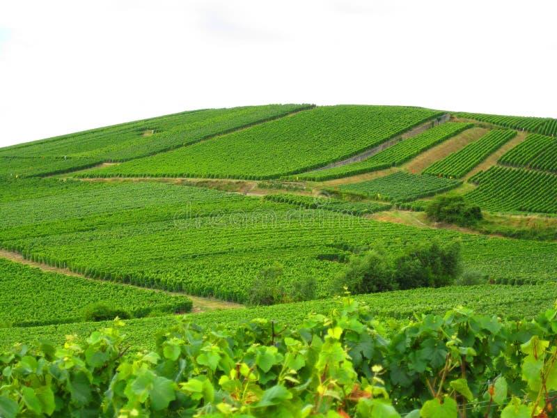 fransk vingård royaltyfri foto