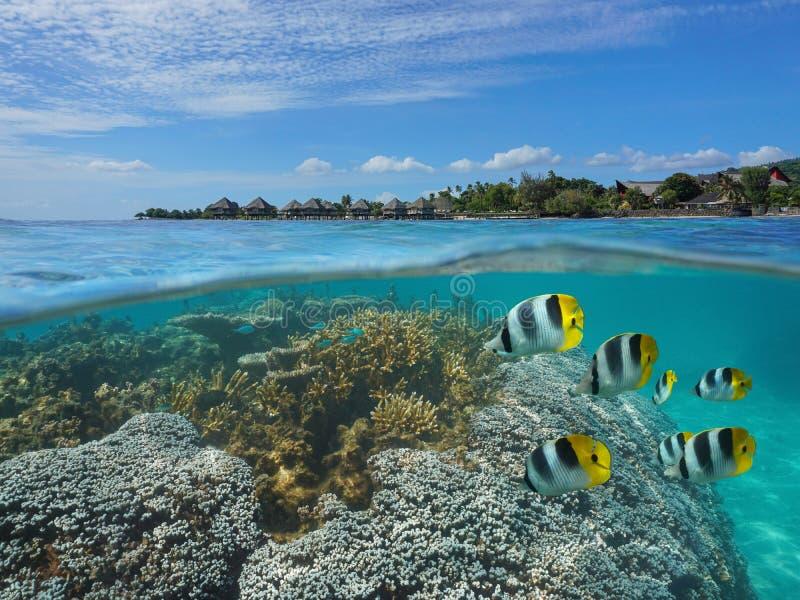 Franska Polynesien Tahiti korall och fisk med semesterorten arkivfoto