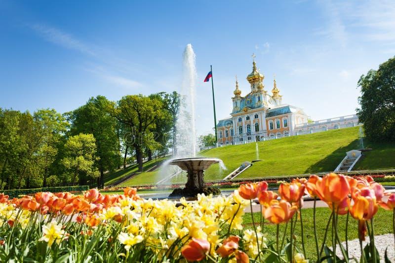 Franskabunkespringbrunnen i lägre parkerar av Peterhof arkivfoto