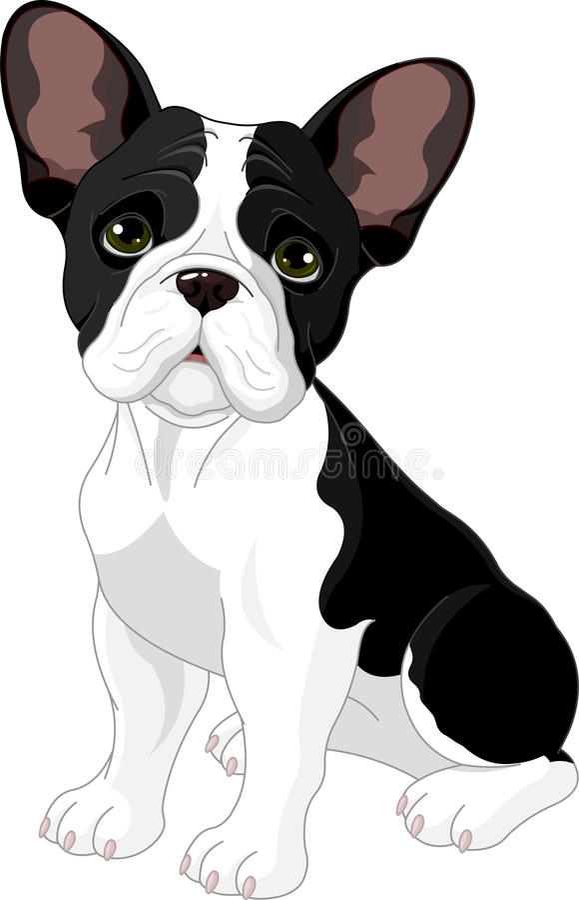 Französische Bulldogge lizenzfreie abbildung