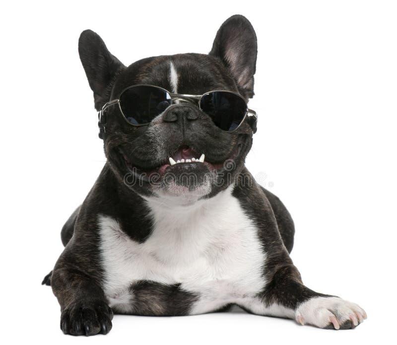 Französische Bulldogge, 4 Jahre alt, tragende Sonnenbrillen stockbilder