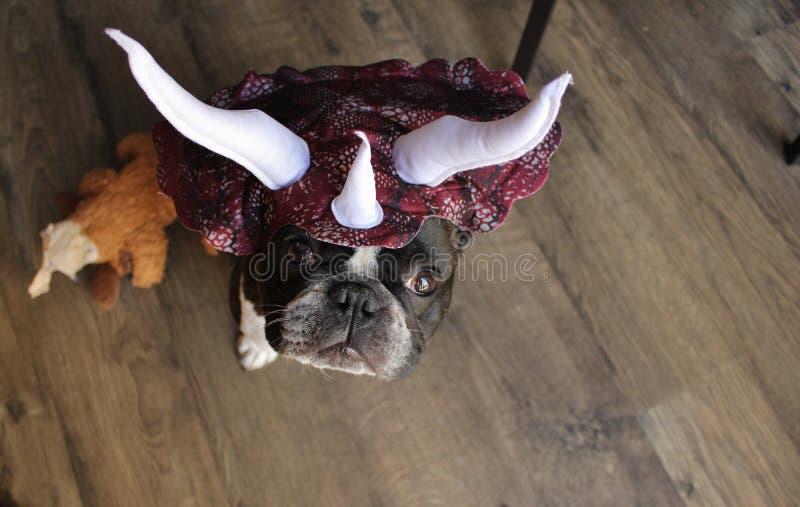 Französische Bulldogge als Stegosaurus lizenzfreies stockbild