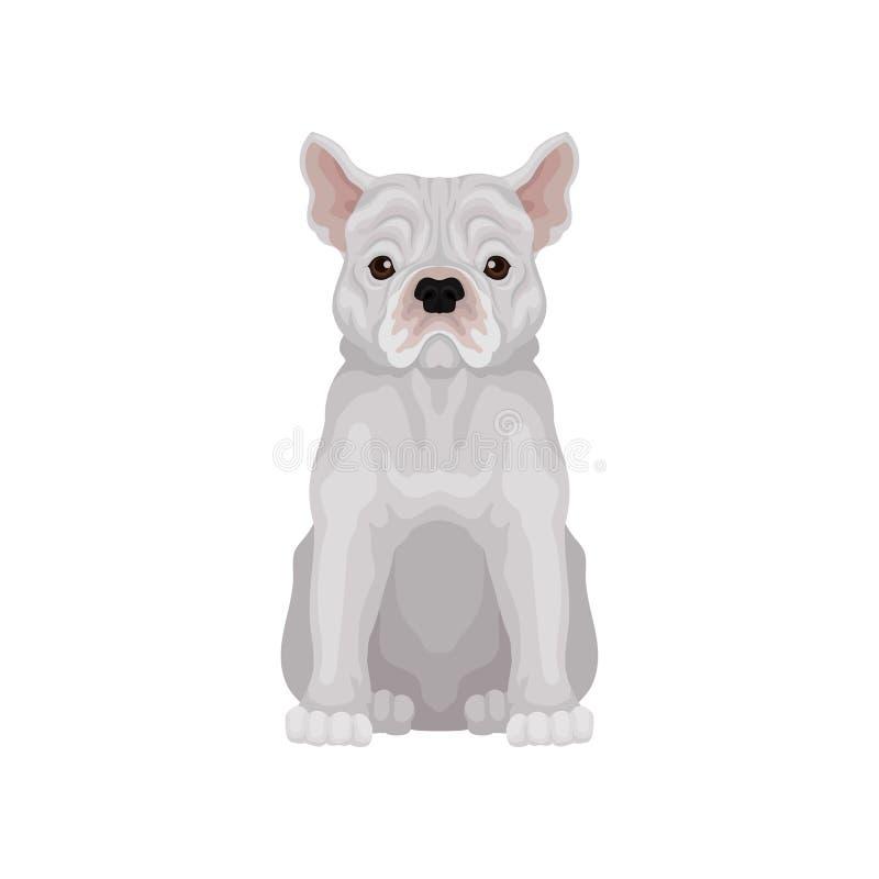Französische Bulldogge des entzückenden Sitzens Kleine Zucht des inländischen Hundes Menschlicher bester Freund s Flacher Vektor  vektor abbildung