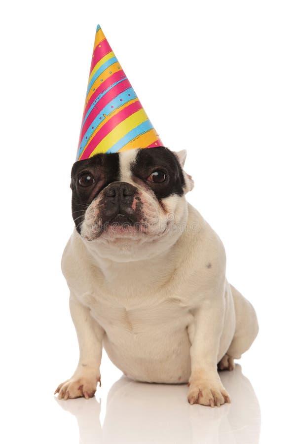 Französische Bulldogge des geduldigen Geburtstages, die auf seinen Kuchen wartet stockbild