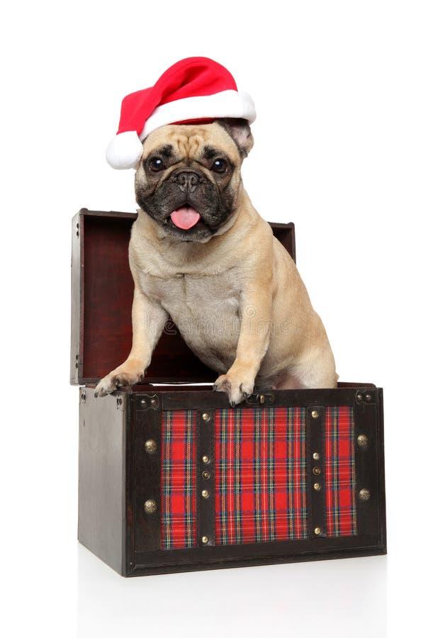 Französische Bulldogge in einem Kasten und tragenden roten einem Hut Sankt auf einem weißen Hintergrund lizenzfreie stockbilder
