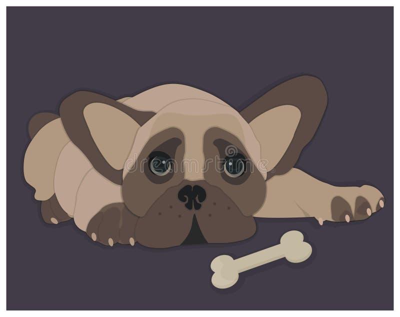 Französische Bulldogge mit dem Knochen stockbilder