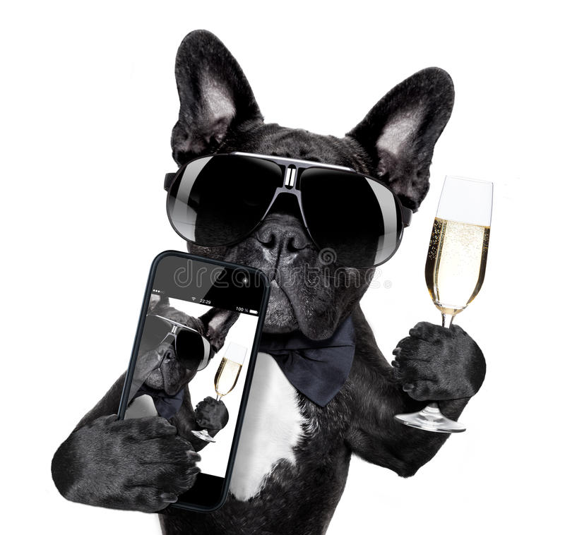 Französische Bulldogge selfie lizenzfreies stockbild