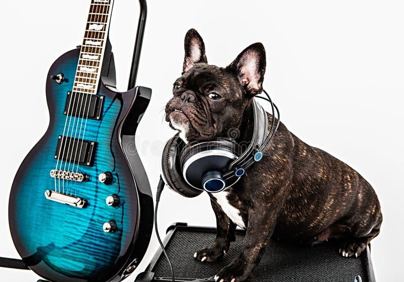 Französische Bulldogge und Gitarre, Verstärker stockfoto
