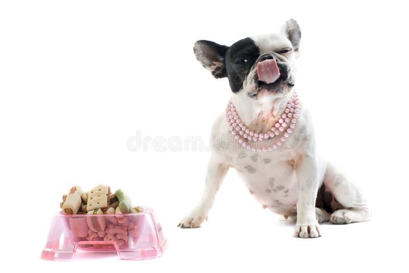 Französische Bulldogge und Nahrung für Haustiere lizenzfreie stockfotografie