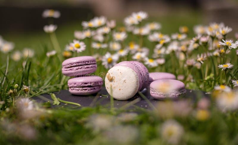 Französische macarons im Garten lizenzfreie stockfotos