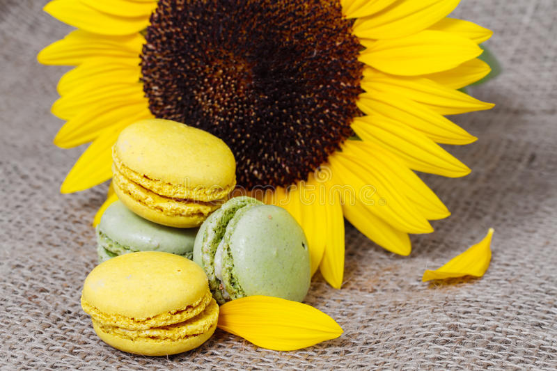 Französische macarons mit gelben Sonnenblumen stockbilder