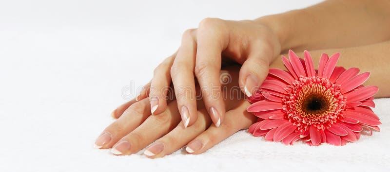 Französische Maniküre und rosafarbene Blume lizenzfreie stockfotografie