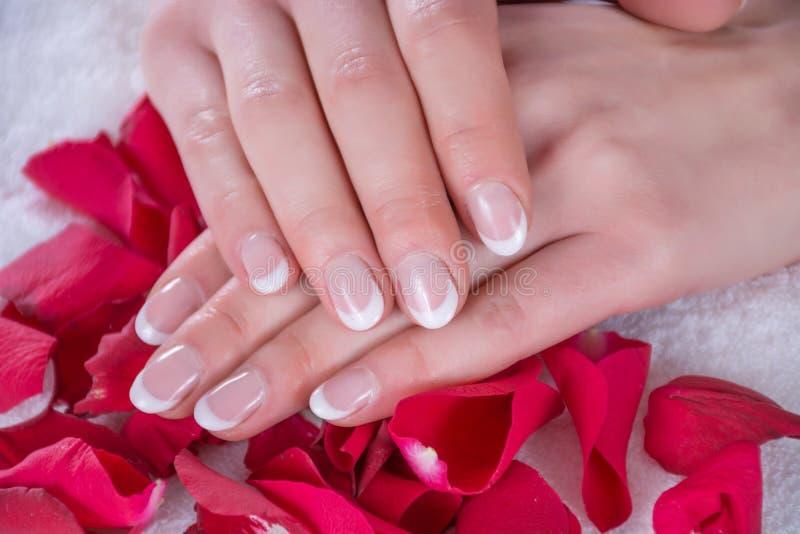 Französische Nägel maniküren auf Händen des jungen Mädchens Hände des Mädchens ist auf roten rosafarbenen Blumenblättern im Schön stockfotos