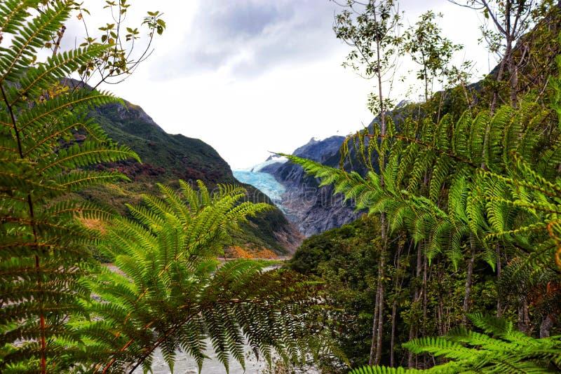 Franz Joseph lodowiec - Nowa Zelandia fotografia stock