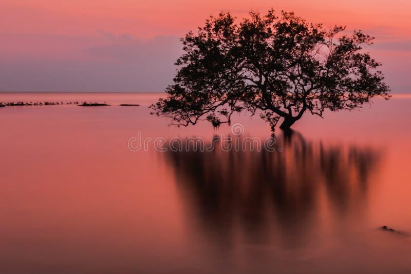 Frappez le sai, Sikao, Trang, Thaïlande photo libre de droits
