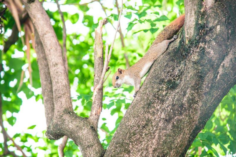 Frappez un écureuil images stock
