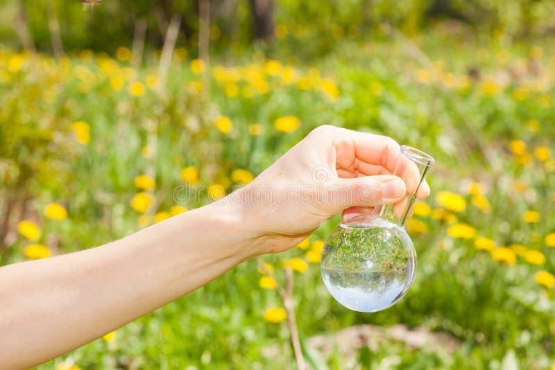 Frasco con agua clara y las plantas verdes imagen de archivo libre de regalías
