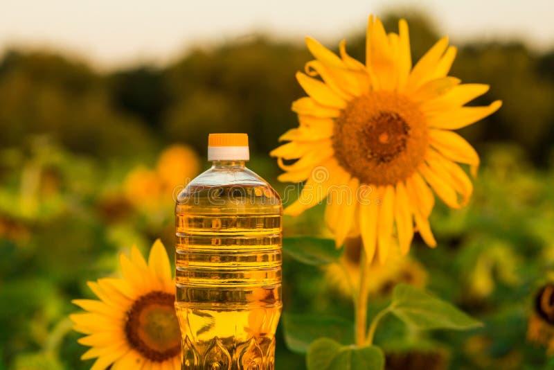 Frasco do petróleo de girassol O óleo de girassol melhora a saúde da pele e promove a regeneração da pilha foto de stock