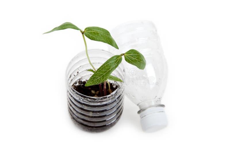 Frasco e Sprout plásticos imagens de stock