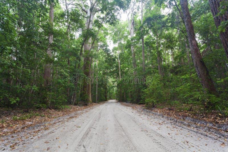 Fraser Island. Dense tropical rain forest on Fraser Island royalty free stock photography