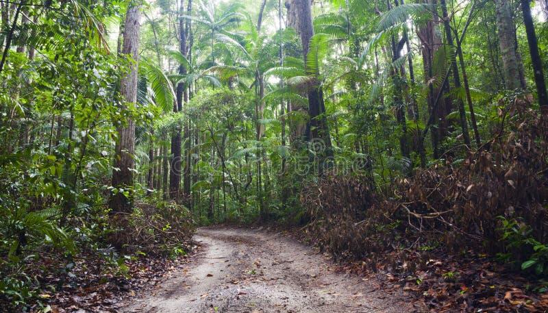 Fraser Island. Dense tropical rain forest on Fraser Island stock photo