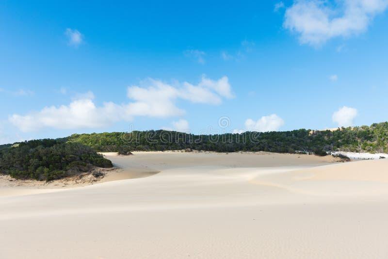 Fraser Island desert sand dunes in Australia. Fraser Island desert sand dune landscape in Queensland, Australia stock image