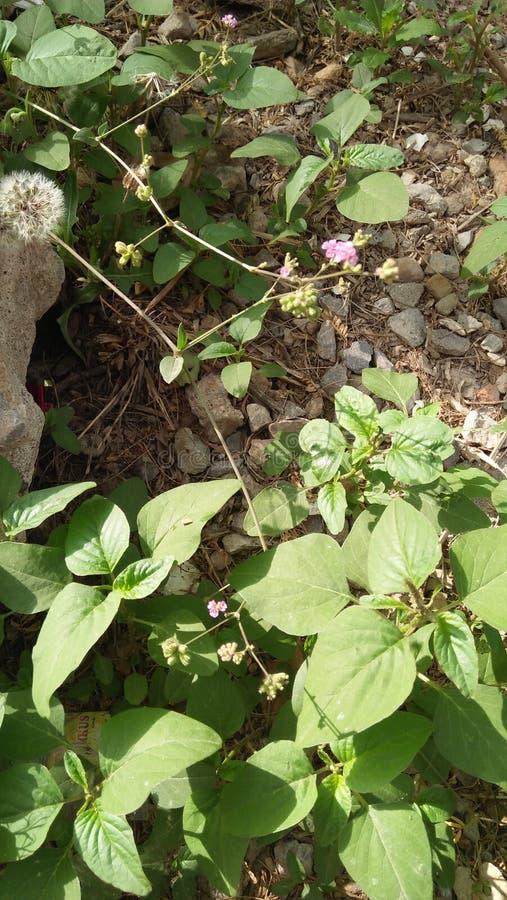 Frash leves piękni kwiaty fotografia royalty free