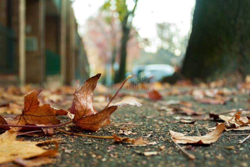 Frasiga torra bruna sidor faller på jordningen fotografering för bildbyråer
