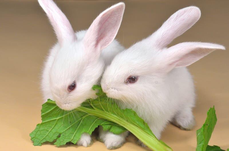 Fratello del coniglio immagini stock libere da diritti