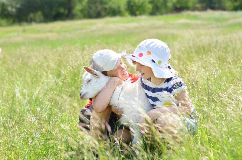 Fratello e sorella che abbracciano la capra del bambino nel campo fotografia stock
